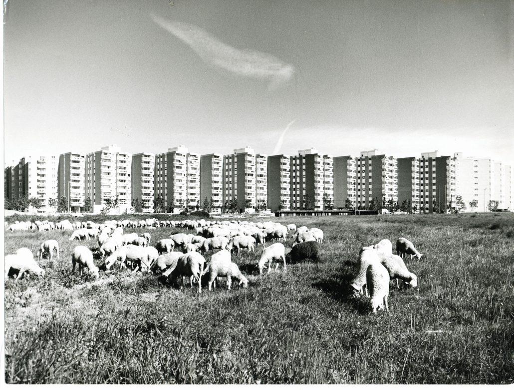 Wohnring Neuperlach mit Schafen (c) WSB Bayern / Doblinger Unternehmensgruppe